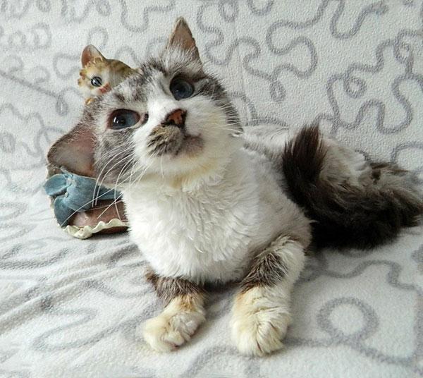 Нежный, очень ласковый котик Пух ищет дом и доброе сердце